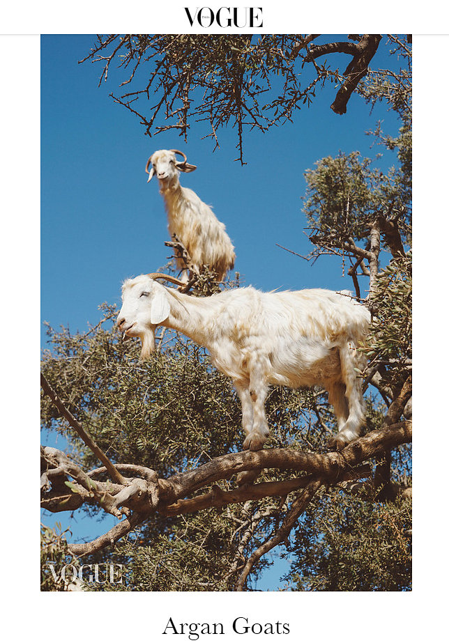 VOGUE.ITALIA- ARGAN GOATS